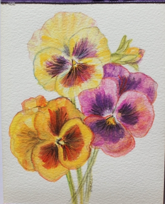 Watercolours 20